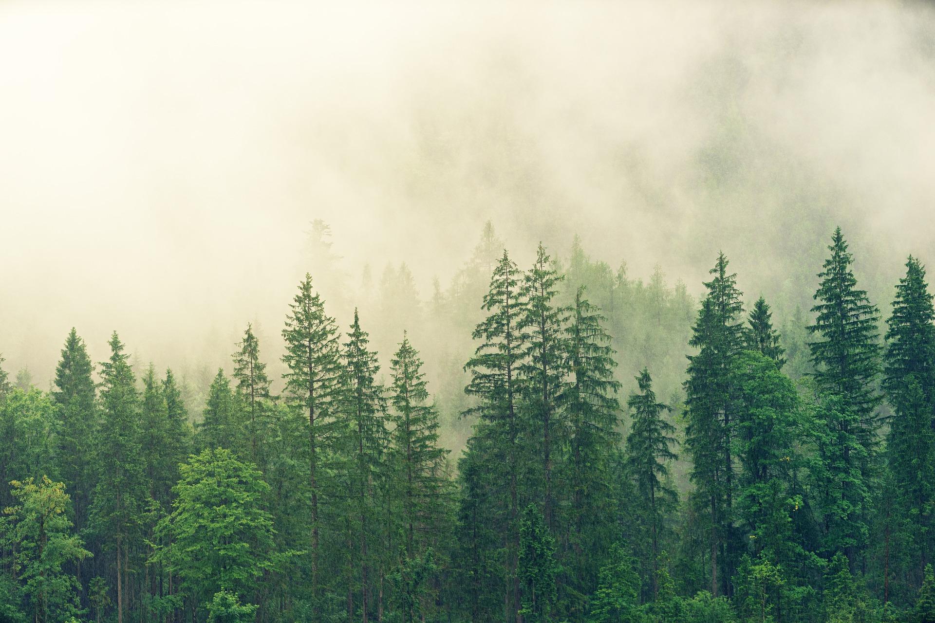 Varpaisjärvi – Pohjois-Savon helmi